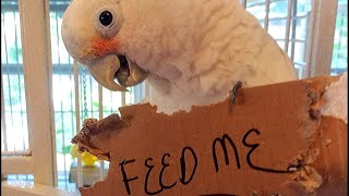 11 Rescue Birds Almost Out of Food | Saved By the Bird Community