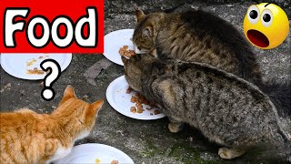 What happens if you feed stray cats – Cute Cats