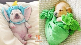 😍 Cute Puppies Doing Funny Things 2020 😍 #6 | Cute VN