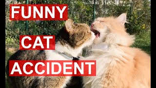 Funny Cat FAIL: Cat biting other Cat's tongue by accident while licking creamy treats (meowing)