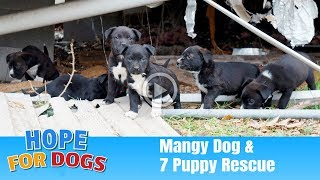 Hope For Paws Rescue 7 Puppies and Mangy Dog – The Dog Saviors