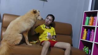 LOVELY SMART GIRL PLAYING BABY CUTE DOGS AT HOME HOW TO PLAY WITH DOG & FEED BABY DOGS #33
