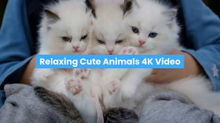 Eye Relaxing Cute Animal 4K Video