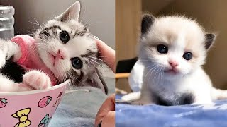 Baby Cats – Cute and Funny Cat Videos Compilation #5