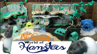 The Curious World of Hamsters / Funny Hamsters / Cute Hamster / ASMR Part 1