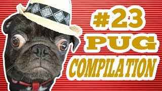 Pug Compilation 23 – Funny Dogs but only Pug Videos | Instapugs