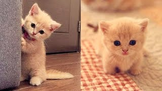 😍 Cute is Not Enough – Cute Kittens In The World #10 | CuteVN Animals