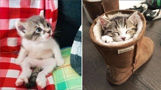 ♥Cute Kittens Doing Funny Things 2019♥ #1  Cutest Cats