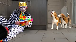 Dogs vs Scary Clown Prank : Funny Dogs Louie & Marie