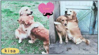 love between dogs|| youtube funny dogs||the funniest dog videos in the world||love between animals