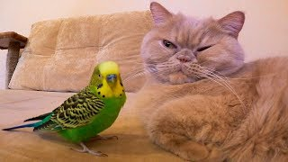 Cat and bird best friends funny animals.