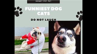 funny dogs videos 2020 �TOP 50 funny animals �cutest dogs and puppies in the world