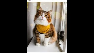 beautiful cats video ,funny cats acts ,cute cats