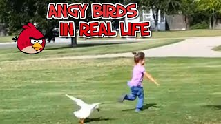 ANGRY BIRDS IN REAL LIFE – FUNNY MOMENTS OF BIRDS ATTACKING PEOPLE