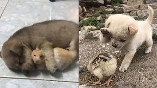 Cutest Puppies In The World 2020 – Baby Dogs And Baby Animals | Puppies TV
