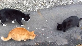 Funny cats – Funny cats very hungry