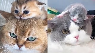 😍 Mother Cat And Kittens 🐱 Funny and Cute Cats Compilation 2020 #2 – CuteVN