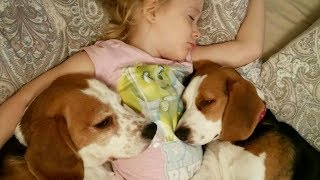 Cute Dogs Hugs Child Because They Don't Want to Wake Up From Bed