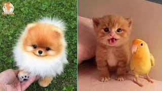 ♥TikTok Pets: Funny and Cute Pets Compilation #6♥ – CuteVN