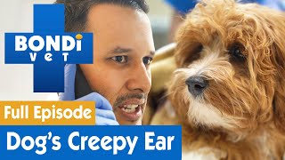 🐶 There's A Spider In This Dog's Ear! | FULL EPISODE | Bondi Vet