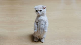 💗Aww _  Funny and Cute Cats Video Compilation #65