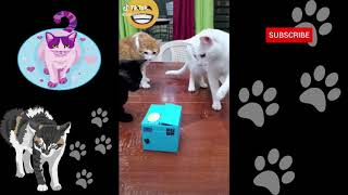 Cats On Tik Tok:No # 68 :🐱 Cats And Dogs🐶: Funny Cats and Dogs 🐱 Tik Tok Cats🐶:Try Not To Laugh