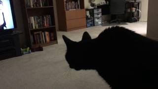 Funny Cat Watches Bird on TV | FUNNY PARRONT TIP TUESDAY