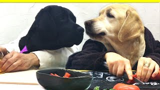 Chef Dogs Cook Vegetable Soup: Funny Dogs Mania & England