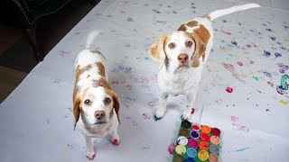 Dogs Have Fun Painting: Cute Dogs Maymo & Penny