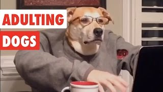 Adulting Dogs | Funny Dog Video Compilation 2017