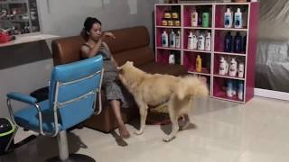 LOVELY SMART GIRL PLAYING BABY CUTE DOGS AT HOME HOW TO PLAY WITH DOG & FEED BABY DOGS #9