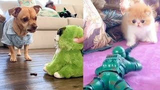 Cat & Dog Reaction to Playing Toy – Funny Cat & Dog Toy Reaction Compilation 2020 | Cute VN