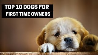 TOP 10 DOGS FOR FIRST TIME OWNERS – Best Puppy Breed For Novices