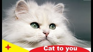 Funny cat videos 2020 | Cat to you | Cat videos 2020 | cat videos funny – papaak youtube
