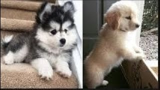 ♥ Cute Puppies and funny Animals ♥ #Puppies #Animals I Cutest Dogs
