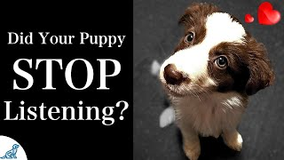 5 Changes To Your Puppy Training That Teach Your Puppy To Listen!