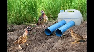 Easy Deep Hole Quail & Bird Trap Using PVC And Plastic Bottle – Amazing Bird Trap With Water Pipe