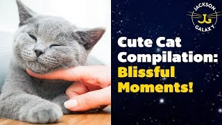 Cute Cat Compilation: Blissful & Beautiful!