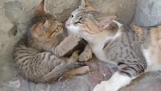 Kittens Story Time With Mother Cat