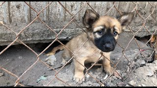 Rescue puppy was stuck in the fence crying for help _ Rescue dog story