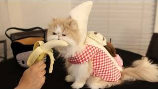 Halloween Cute Banana Cat
