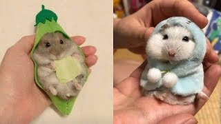 Funny and Cute Hamster Compilation 🐭 – Cutest Hamster In The World 2020 #3 | Cute VN