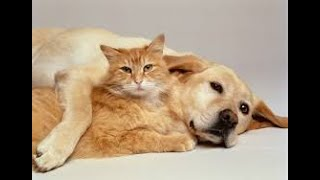 CUTE CATS AND PUPPIES COMPILATION FUNNY VIDEO