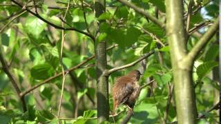 Cute bird in the forest