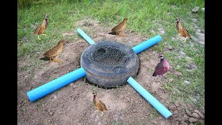 Easy Deep Hole Quail & Bird Trap Using PVC And Car Tire – Awesome Quail Trap By Car Tire And PVC