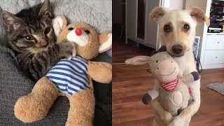 💗Aww – Funny and Cute Dog and Cat Compilation 2020💗 #64 – CuteVN