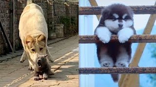 Cutest Funniest Puppies – Baby Animals And Baby Dogs | Awesome Funny Pet Animals Videos – Puppies TV