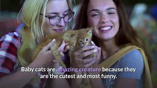 OMG || Description To Video | baby cats cute and funny cat videos compilation