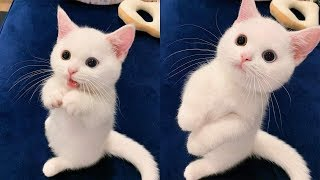 💗Aww – Funny and Cute Dog and Cat Compilation 2020💗 #63 – CuteVN