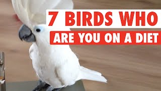 7 Birds Who Are You On A Diet (Funny Compilation)